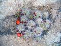 328cactusflower