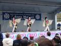 414geishasakuramatsuri